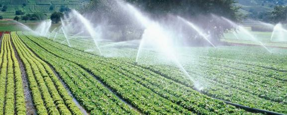 irrigated field